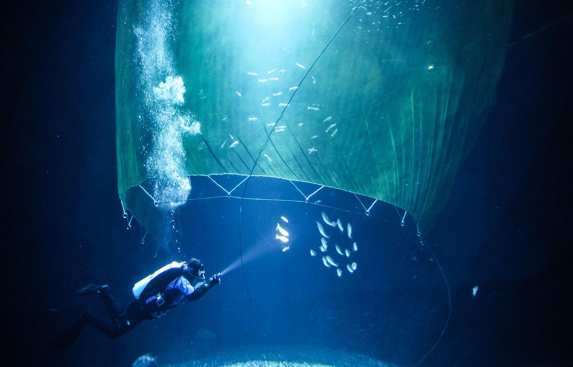 Ozeaneum öffnungszeiten